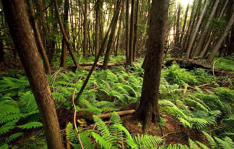 Las dobry dla ciała i duszy